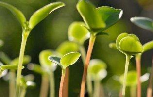 Про стимуляторы роста для растений