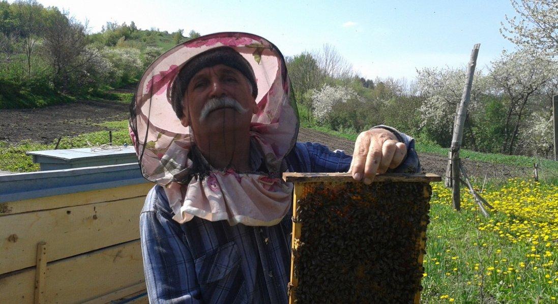 Зцілив доньку завдяки… бджолам