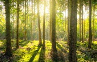 Які мрії здійсняться, якщо сниться ліс