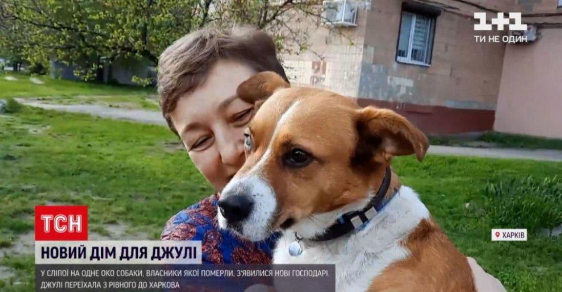 У Рівному рятували  сліпу на одне око собаку, яка тиждень жила із тілом господаря