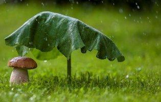 Дощі з грозами: синоптики назвали «мокрі» області 24 квітня