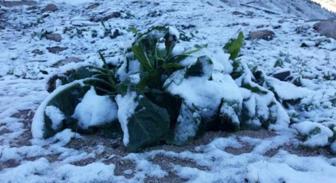 У Туреччині випав сніг