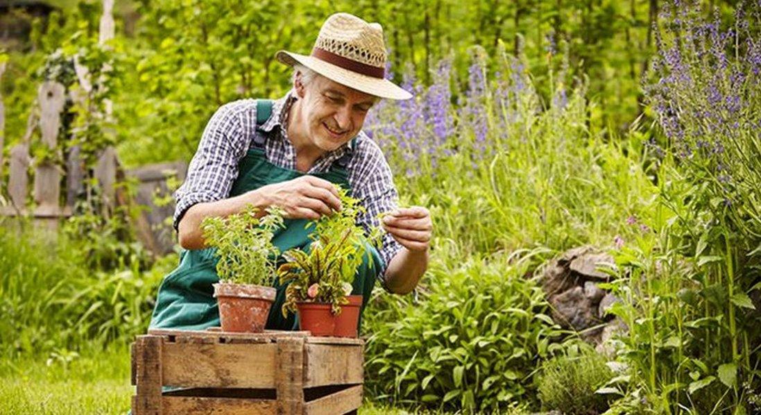 Посівний календар на червень 2021 року: коли та що краще садити