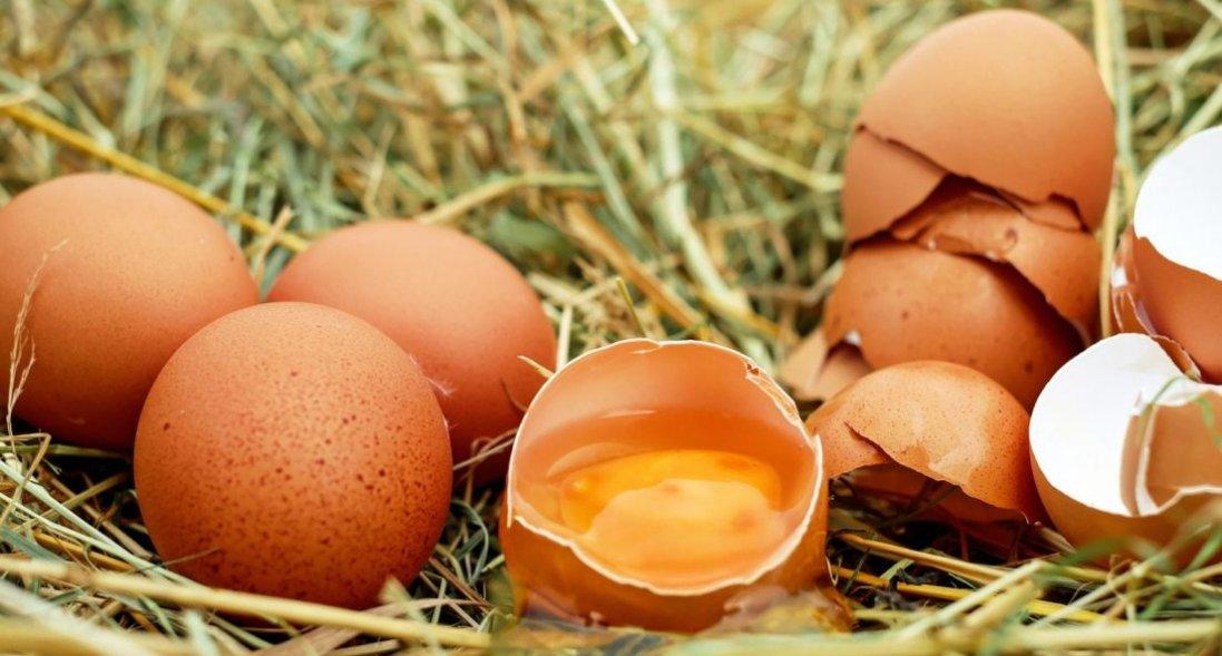 Чому зранку треба їсти яйця: 4 причини