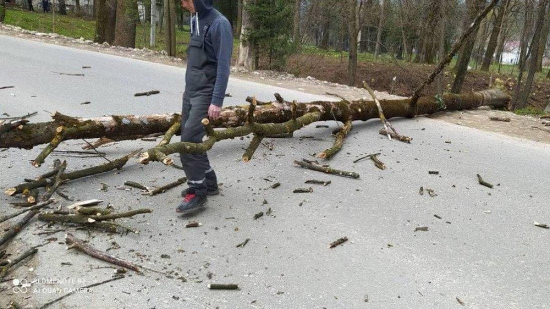 У Львові дерево впало на 8-річного хлопчика, який гуляв у парку