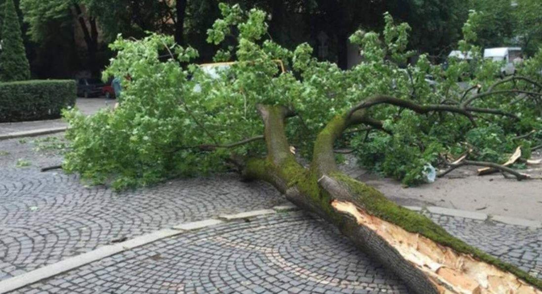 Переломи кісток і основи черепа: в Львові на дитину впало дерево