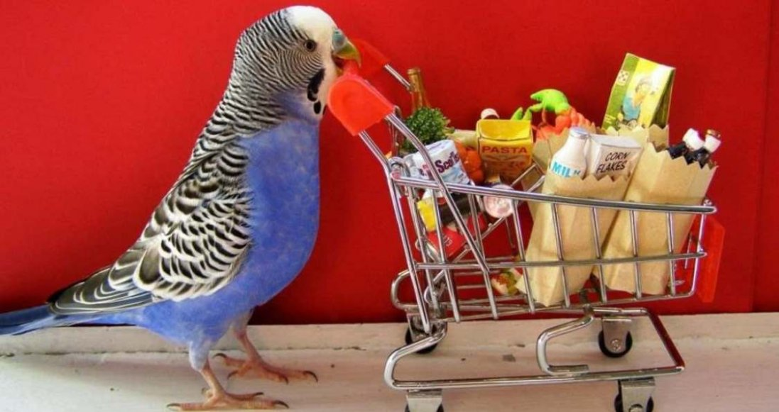 Особенности питания домашних попугаев