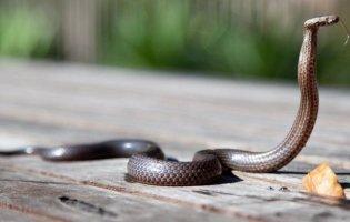 На Прикарпатті трьох дітей вкусили змії: вони в реанімації у важкому стані