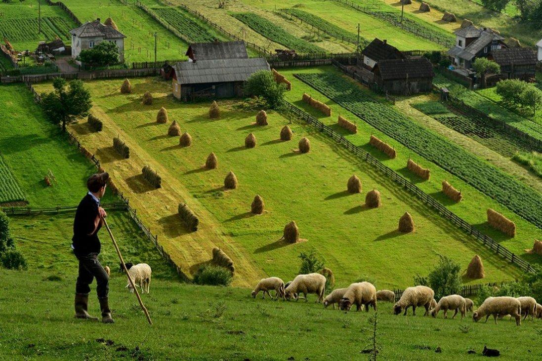 Запуск ринку землі: в Україні вже уклали понад 500 договорів з продажу