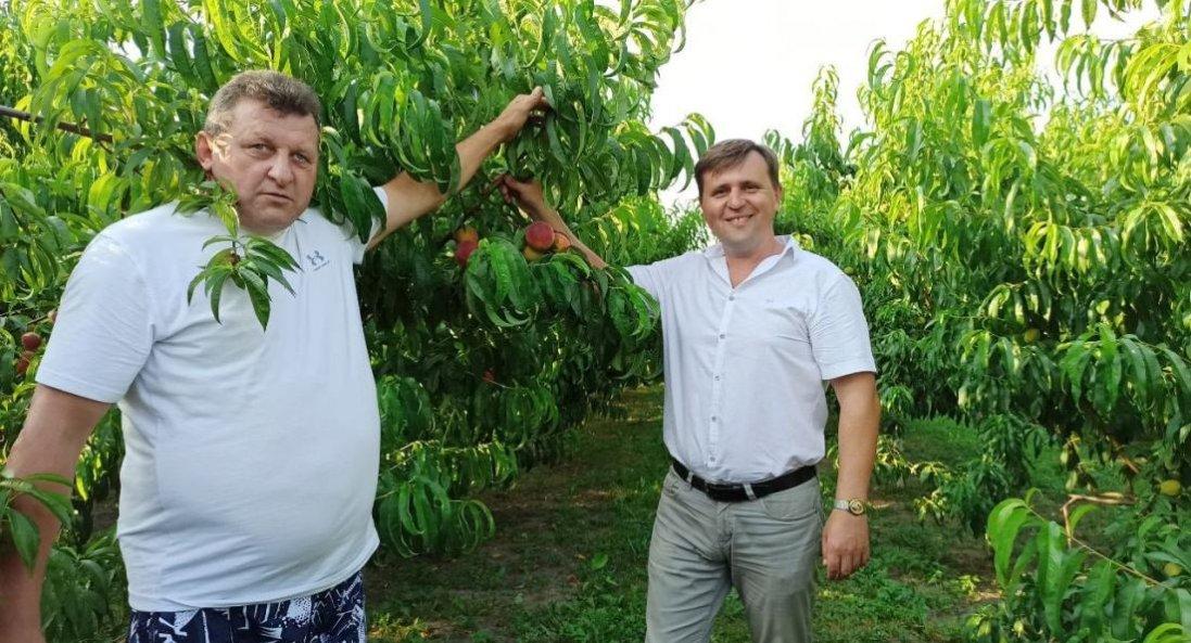 «І на 15 сотках землі можна заробляти гроші», - власник персикового саду Леонід Гнатюк