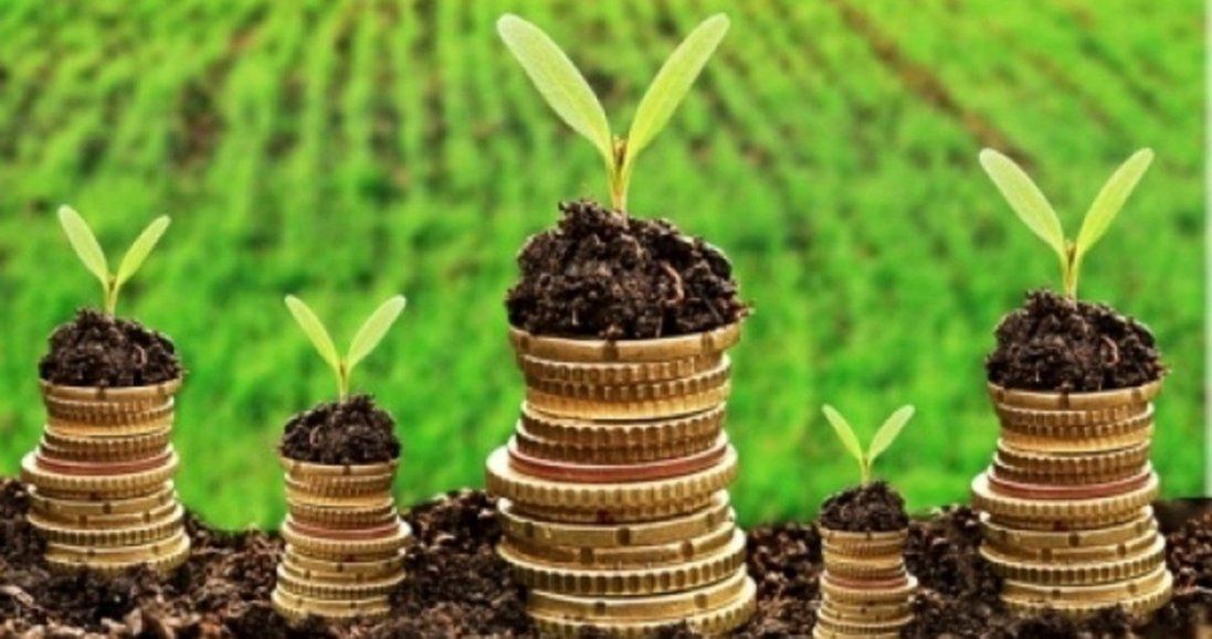Скільки коштує гектар землі в Україні, – міністр агрополітики