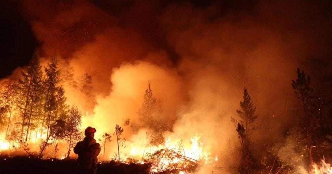 У Туреччині погасили великі лісові пожежі