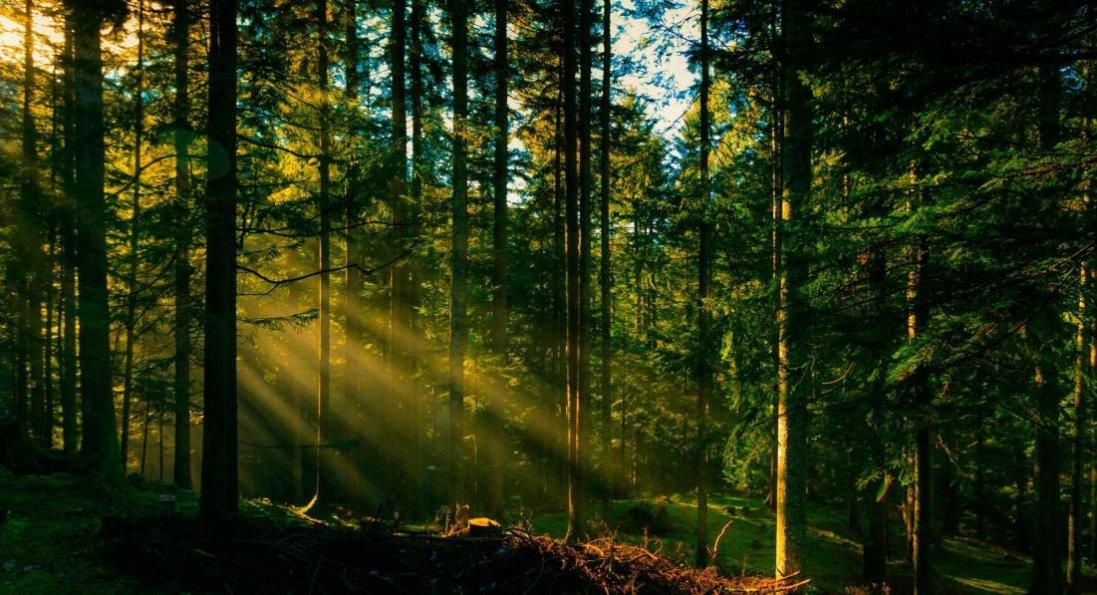 У Луцькому районі будуть нові ліси