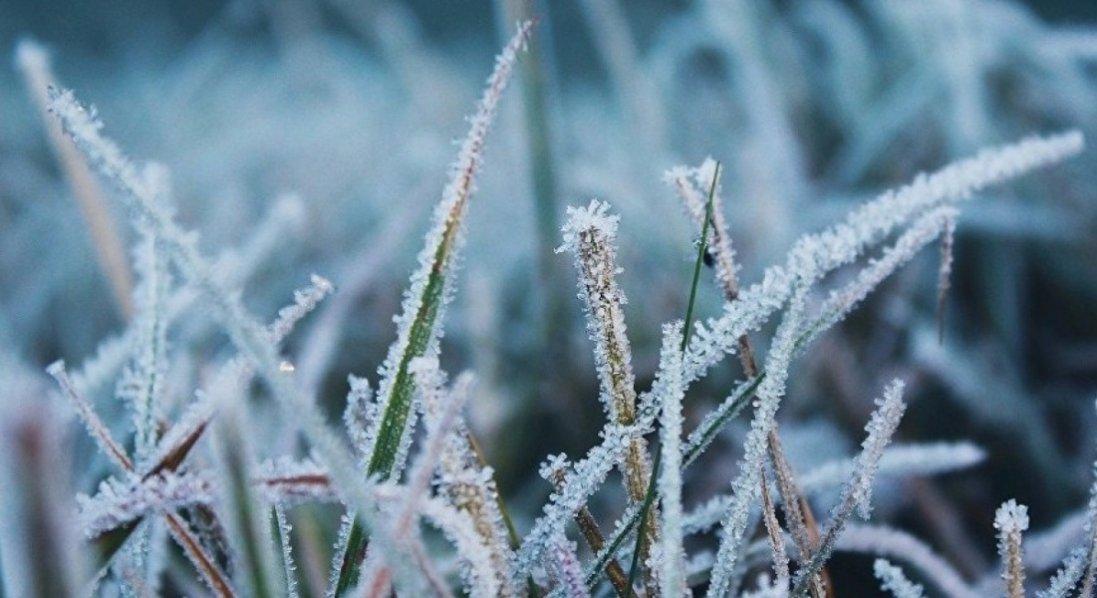В Україні наступного тижня прогнозують заморозки