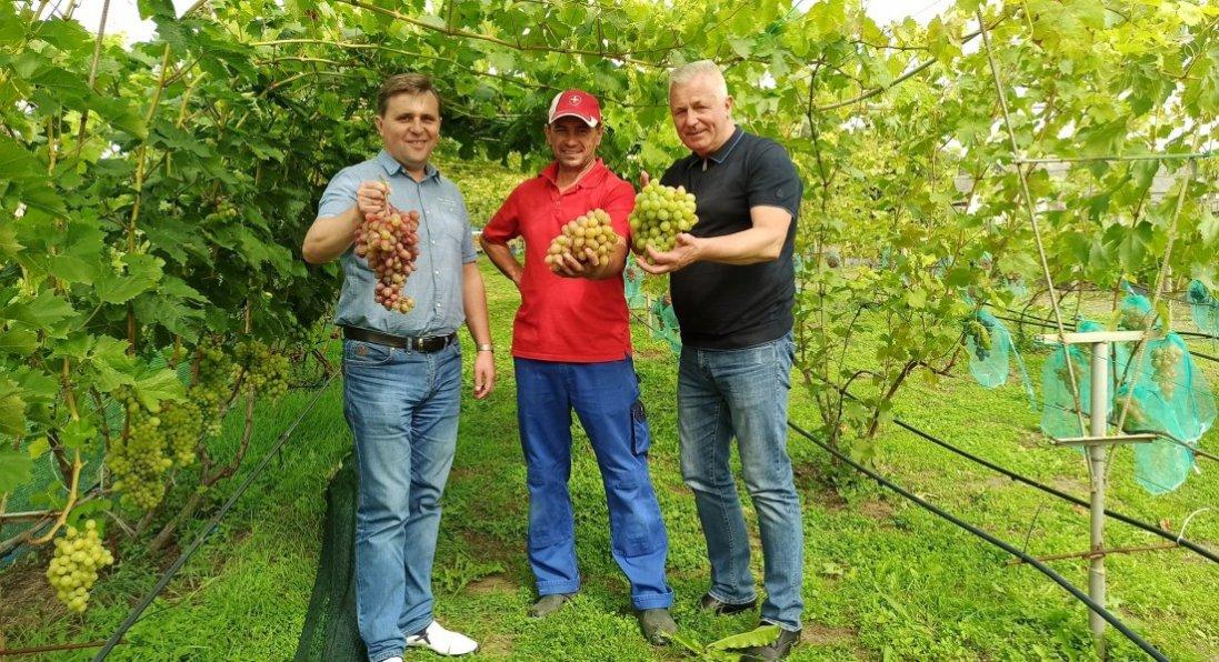 «Вирощувати виноград у п'ять разів вигідніше, ніж картоплю», - аграрій з Волині Валерій Пилипчук