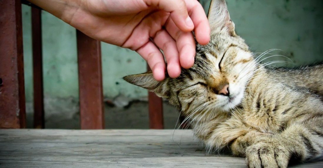 Вчені знайшли зв'язок між психозом і котами