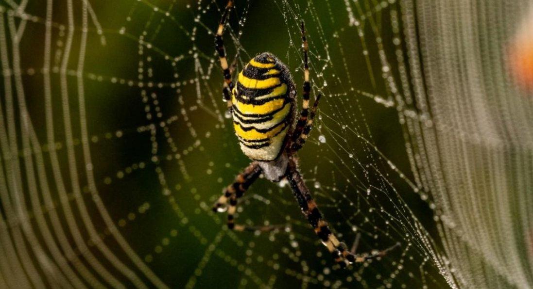 На Волині дитина на подвір'ї знайшла небезпечного павука