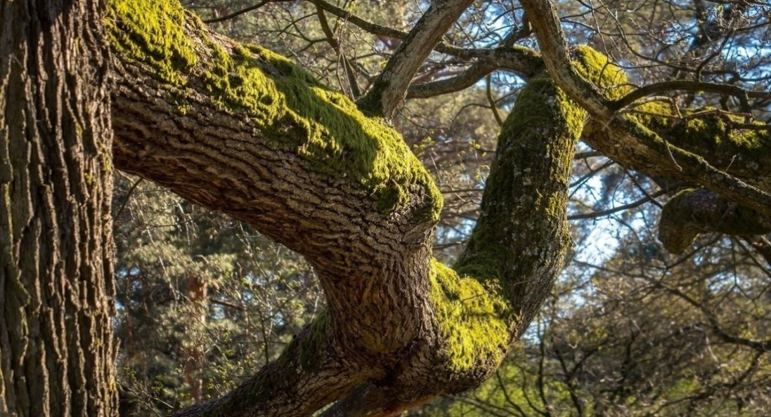 На Прикарпатті дерево розчавило пенсіонера