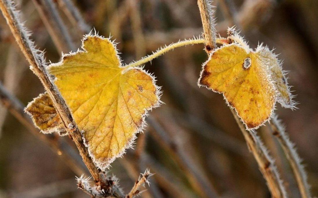 У жовтні в Україні буде холодно й дощитиме: народний синоптик дав прогноз на місяць