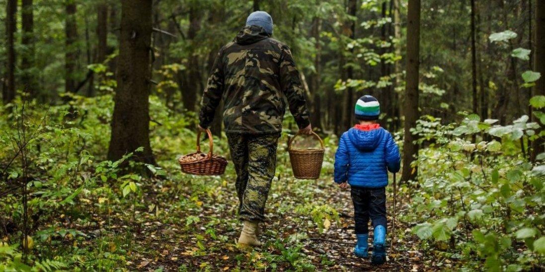 На Волині у чотирьох грибників виявили хворобу Лайма