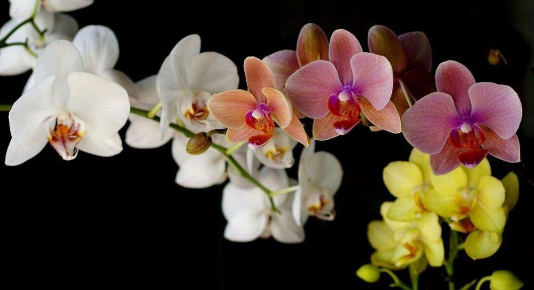 Допоможіть орхідеї пустити коріння
