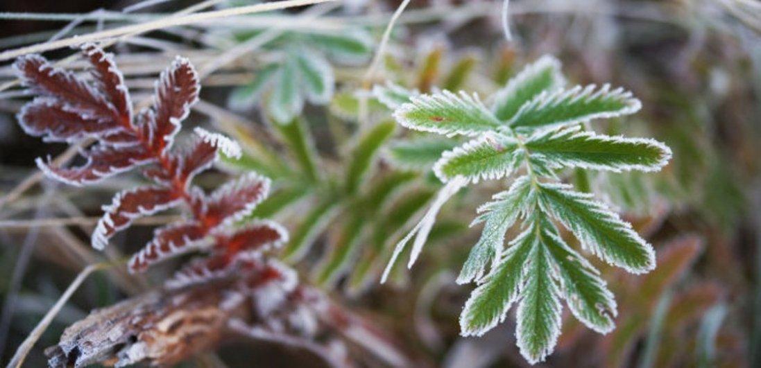 На Волині очікуються нічні заморозки: коли саме