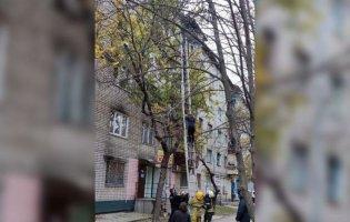 На Дніпропетровщині вагітна вилізла на дерево:  чому вона там опинилася